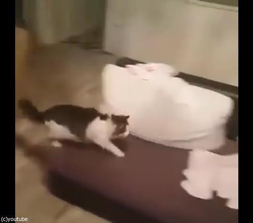 うちの猫は赤ちゃんから離れない03