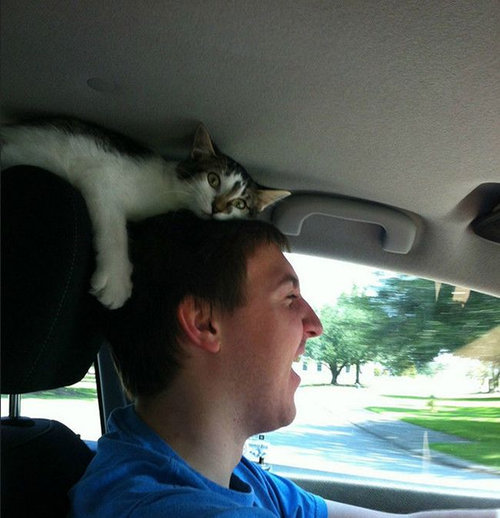猫に生活を脅かされる09