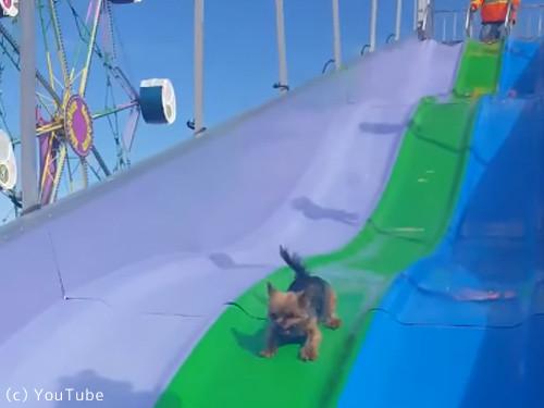 すべり台大好き犬02
