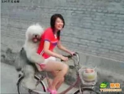 自転車やバイクに乗る犬たち14