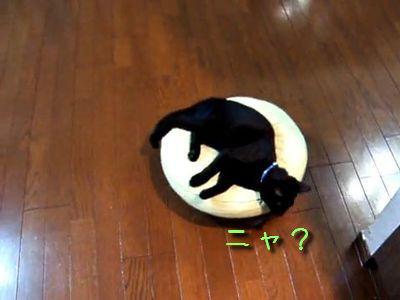 お掃除ロボットと黒猫