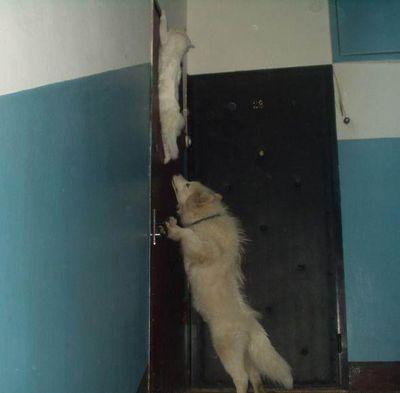 犬と猫の戦い02