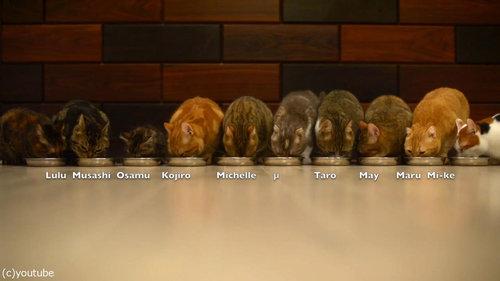猫10匹が並んで食事03