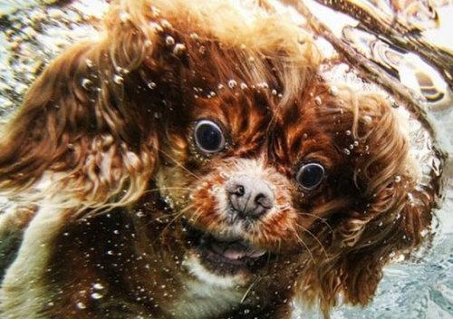 犬の表情12