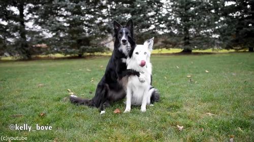 写真写りを気にする犬たち02