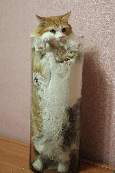 ガラスの上の猫12