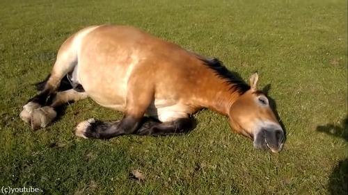 いびきの大きな馬05