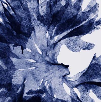 花のレントゲン13