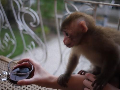 サルに赤ワイン00
