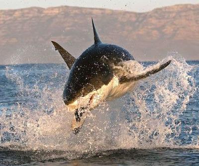 飛び跳ねるサメ04