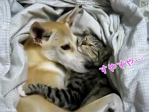 仲良く眠る犬猫00
