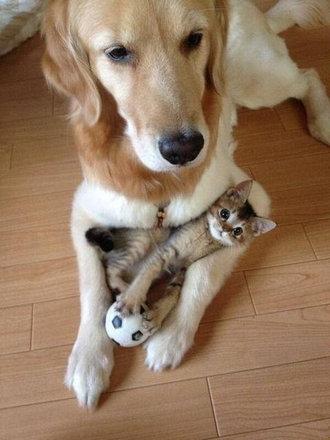 猫をぎゅーっとしたくなる写真09