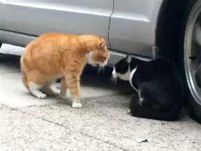 猫の上下関係