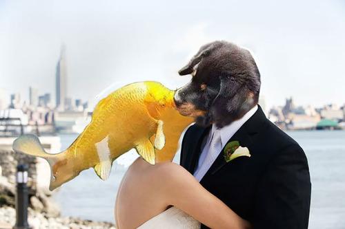 犬と魚の愛情08