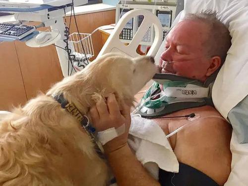 愛犬が首を骨折した飼い主を救出01