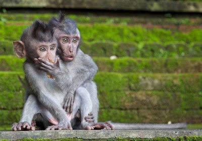 10驚きを隠せないびっくりしている動物たち