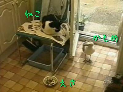 カモメと猫と餌