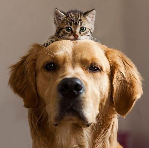 猫をかぶる犬たち09