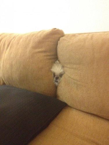 隠れるのが下手な犬たち24