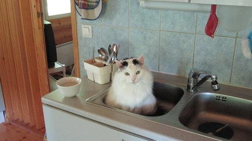 キッチンの猫05