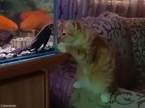 猫vs水槽02
