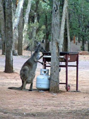 そのころオーストラリアでは02