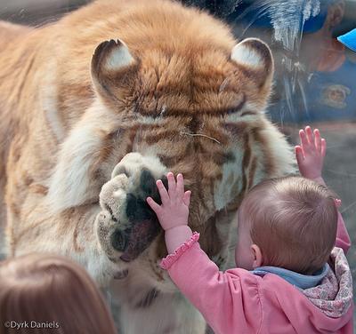 ライオンと子供01