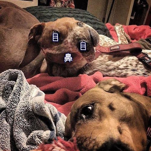 変な顔と話題を呼ぶ犬02