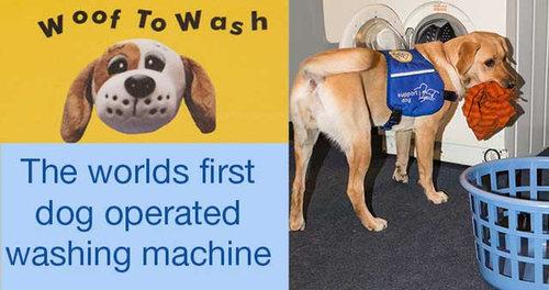 犬専用の洗濯機01