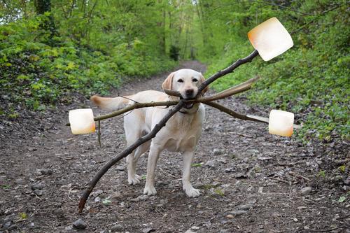 必殺技を使いそうな犬09