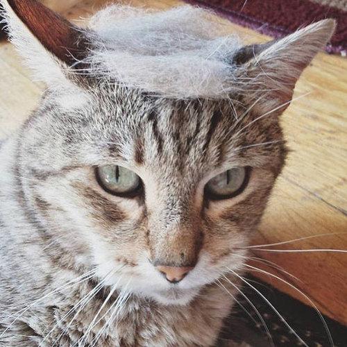 ブラッシングした猫の抜け毛をかつらに09