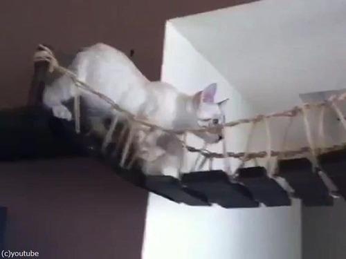 猫と吊り橋01