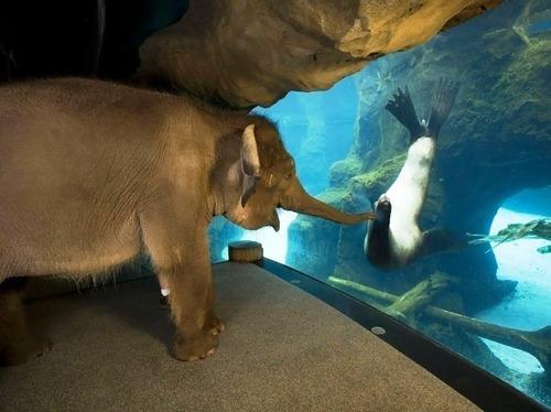 ゾウに動物園を巡らせたら01