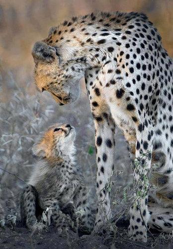 01動物の親子