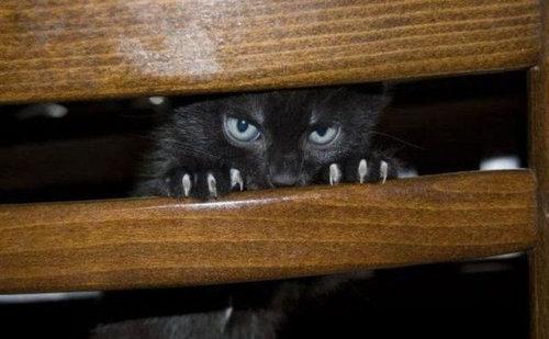 猫は見ている19