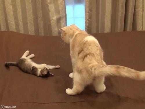 怒られた子猫の謎ポーズ01