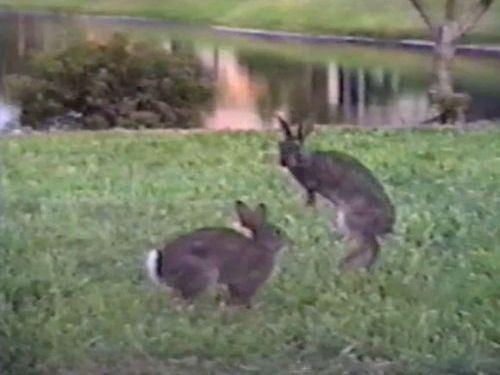 ウサギのジャンプ対決01