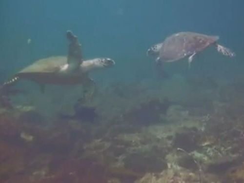 海亀のハイタッチ02