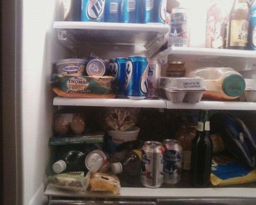 猫は見ている03