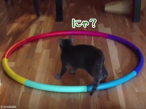 猫フラフープ00