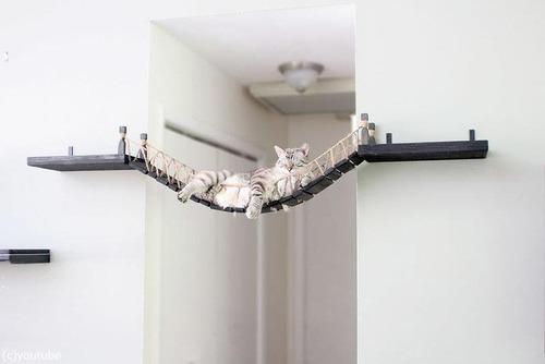 猫と吊り橋04