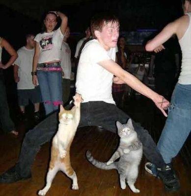 ハッピバースデーな猫14