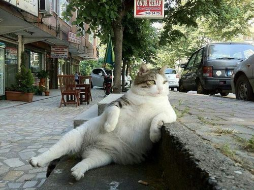 余裕のある猫00