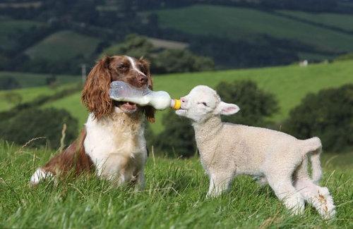羊飼いの楽しみ11