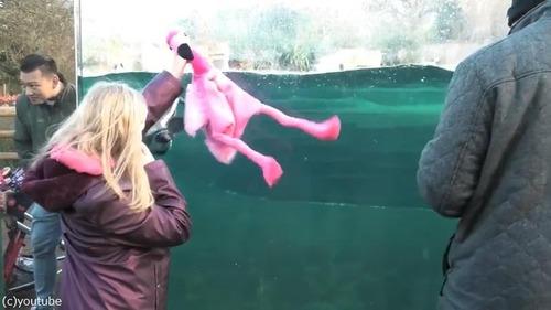 ペンギンを手懐ける女の子01