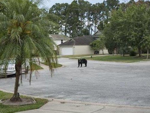 住宅街にクマが侵入01