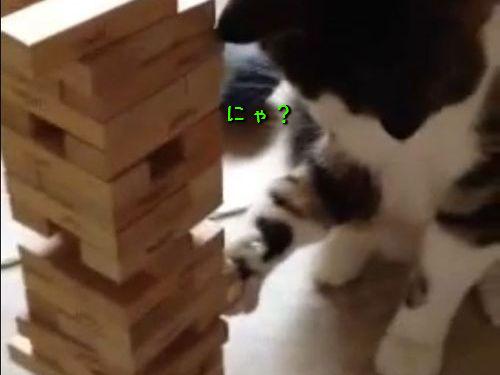 猫とジェンガ00