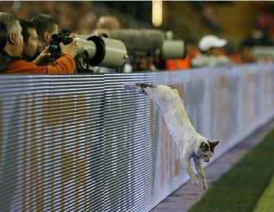 サッカー大好き猫03