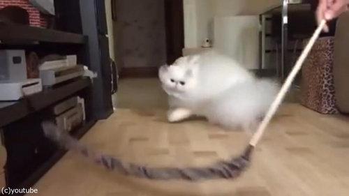 綿毛のような猫01