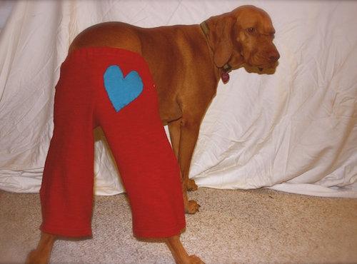 ちょっと考え込んでしまう犬とズボンの疑問02